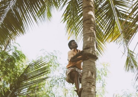 Production of palm tree oil can be up to 40 times more polluting than traditional diesel